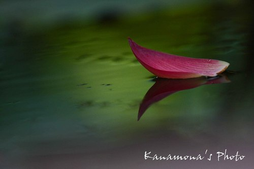 ピンクの小舟